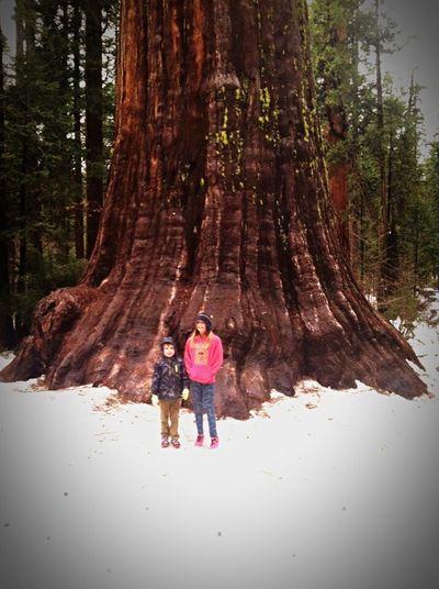 Check This Out Big Trees Beautiful Nature Beautiful California