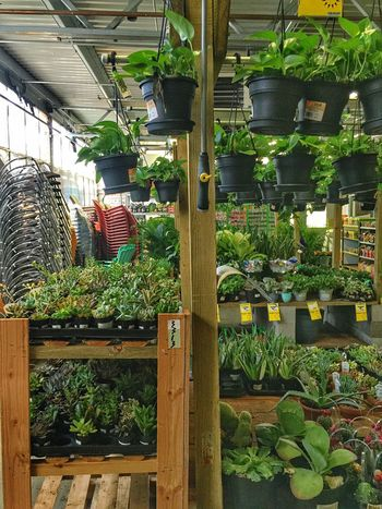 Houseplants Houseplant Nursery Garden Nursery Indoor Plants Hanging Plants Shopping For Plants Home Center