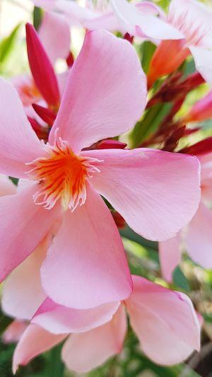 schöne Blüte...