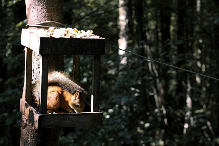 Squirrel eating food in birdhouse