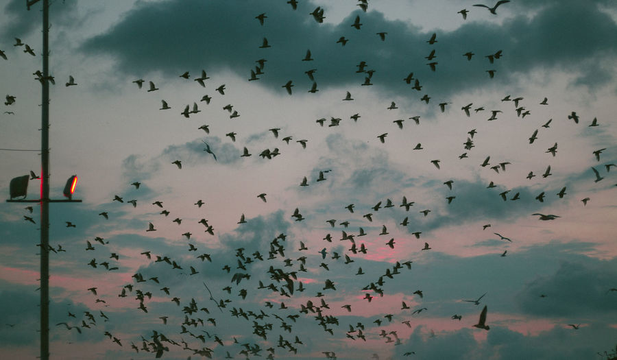 Animal Behavior Animal Themes Animals In The Wild Atmosphere Bird Cloud - Sky Day Dramatic Sky Flight Flock Of Birds Flying Freedom Low Angle View Majestic Mid-air Migrating Nature Outdoors Red Sky Spread Wings Togetherness Tranquility Wildlife Zoology