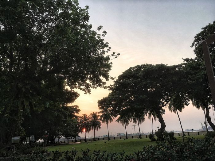 Lagos Tree Plant Sky Nature Sunset Growth Silhouette Beauty In Nature Tranquility No People Outdoors Tranquil Scene Land Scenics - Nature Water Idyllic Field Non-urban Scene