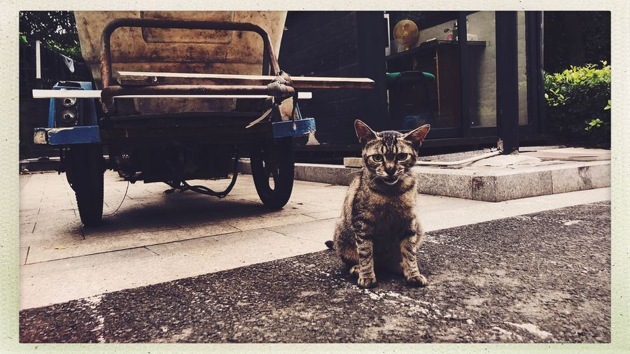Streetphotography Cat Domestic Animals Mammal Domestic One Animal Pets Auto Post Production Filter Animal Themes Built Structure Nature Architecture Day Vertebrate Shadow Canine No People Transfer Print Building Exterior Sunlight Animal