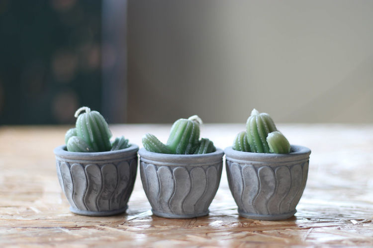 Cactus Close-up Day Green Color Horizontal Indoors  Nature No People