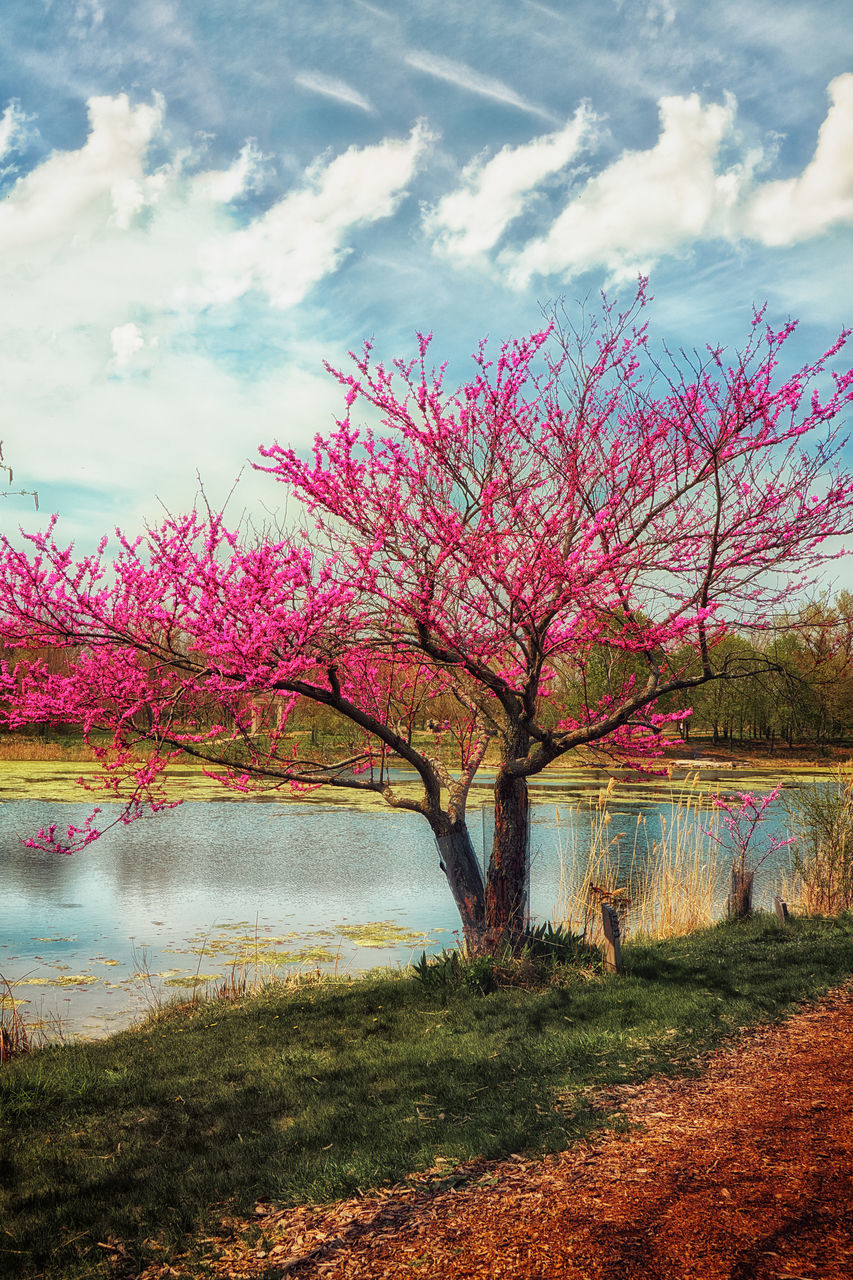 beauty in nature, tree, nature, lake, water, tranquility, tranquil scene, scenics, landscape, sky, no people, day, outdoors, branch, growth, grass, flower
