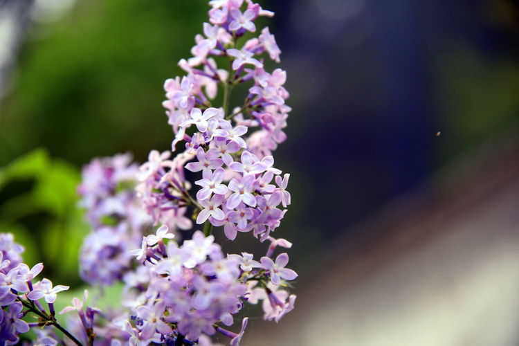 Lilac flowers on the branch and with gradient colored geometric background