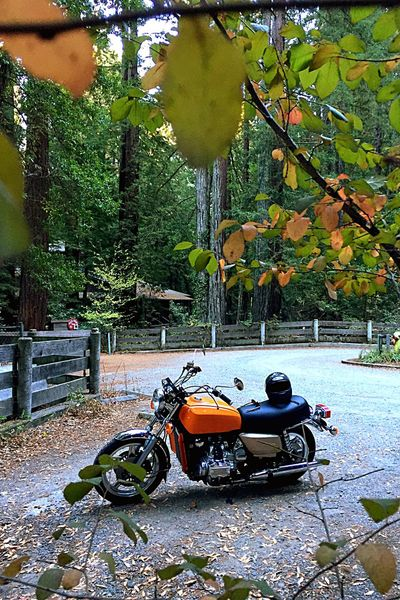 """Had to go pick up the freshly restored 1979 GL1000 today. Because I only have a permit, I """"had to"""" drive back roads all the way from Fairfield, Ca... This is Pinehurst road between Moraga and Oakland... It's like a miniature Muir Woods in there and the temp dropped more than ten degrees the moment I entered it..."""