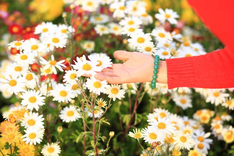 Cropped hand of woman touching flower