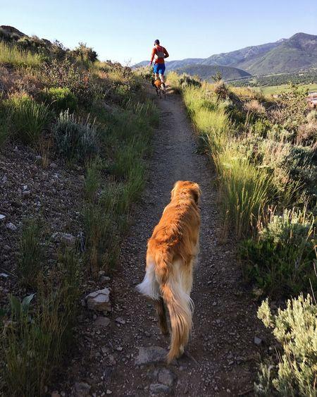 morning run. Park City, Utah Mammal Plant One Animal Pets Domestic Animals Domestic Vertebrate