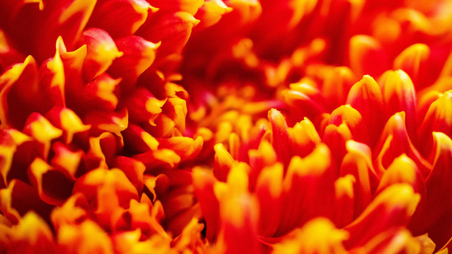 Engulfed Flower