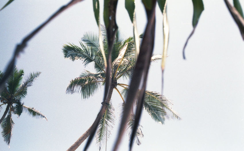 35mm 35mm Film 35mmfilmphotography Colors Cultures Film Photography Horizon Over Water Island Island Life Landscape Long Exposure Nature Nature Photography Ocean Palm Tree People Sea Seascape Sri Lanka SriLanka Tea Travel Water Wave Waves