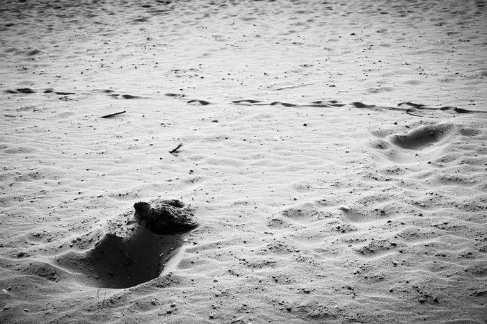 Blackandwhite Beach Landscape Black And White Black & White