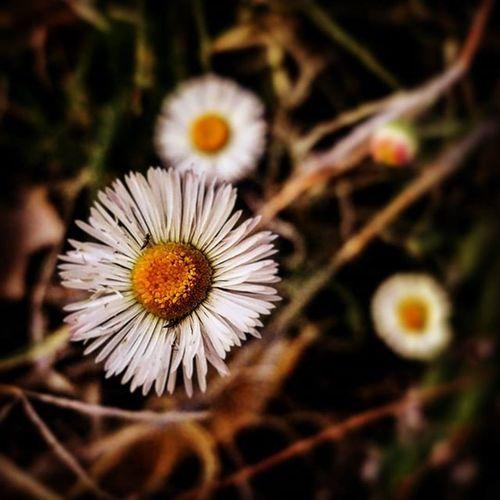 Flowers. Flowers