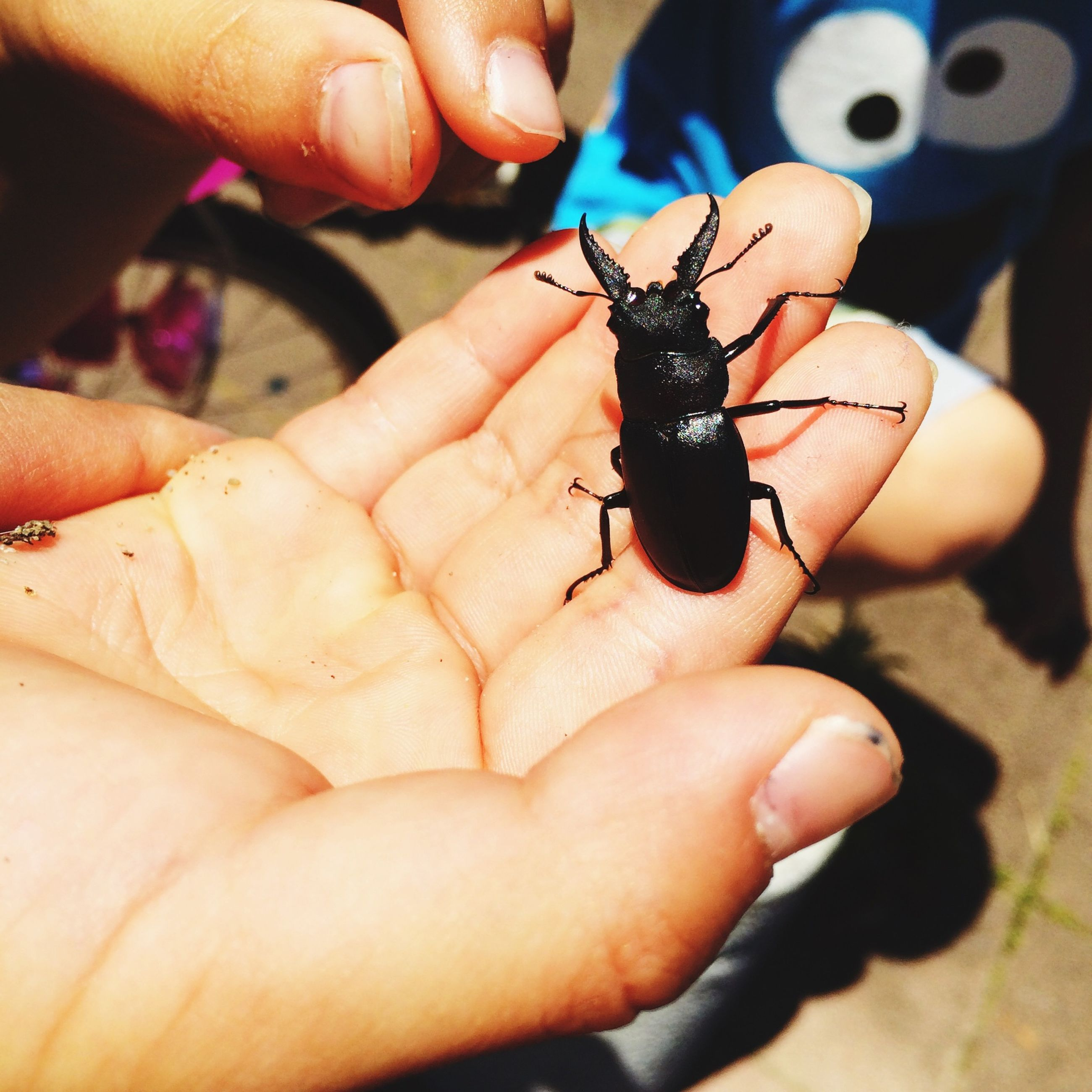 insect, person, animal themes, one animal, animals in the wild, wildlife, human finger, holding, unrecognizable person, part of, close-up, focus on foreground, cropped, lifestyles, leisure activity, men, day