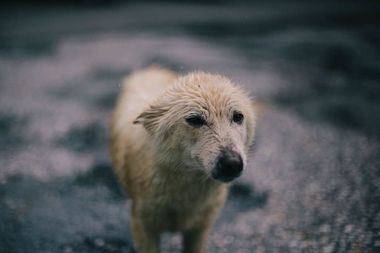 Dog Dogs Sad Hungry Cold Wet Stray Animal Stray Dog One Animal Canine Pets No People Focus On Foreground Animal Wildlife Outdoors Cute Depression Mammal Lonely Animals In The Wild Vertebrate Puppy Doggy Love Kindness