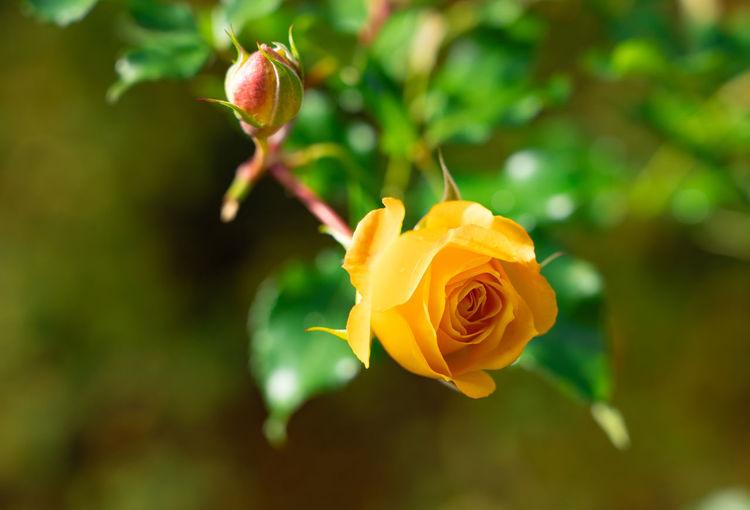 Rosé Garden