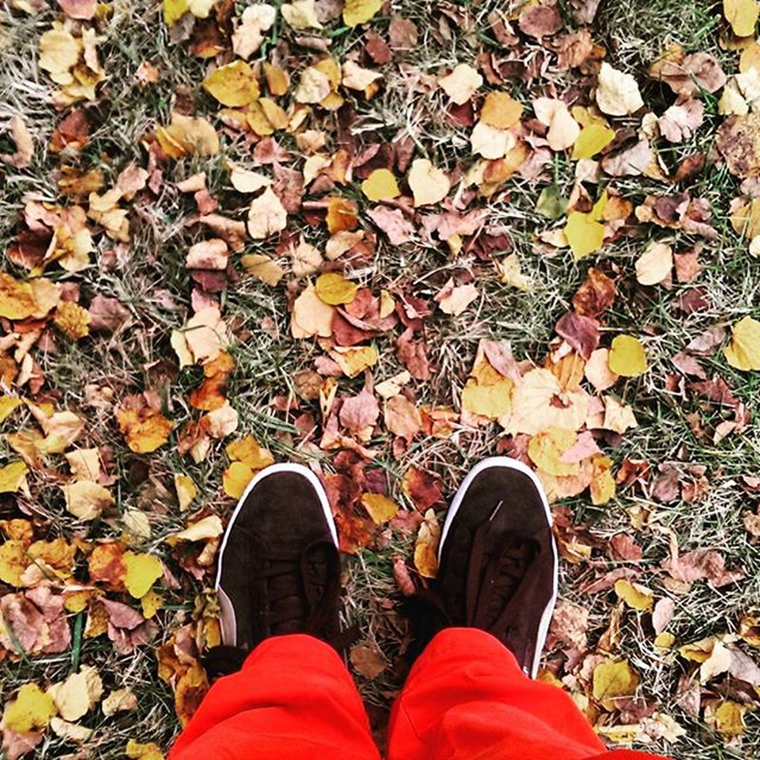 low section, person, shoe, personal perspective, standing, autumn, footwear, leaf, human foot, high angle view, lifestyles, change, directly above, jeans, season, dry, unrecognizable person