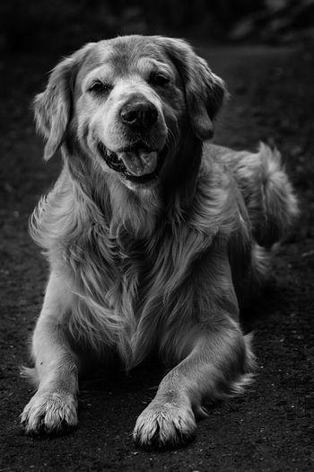 Bandit. Dog Hond Animal Dier Animals Dieren