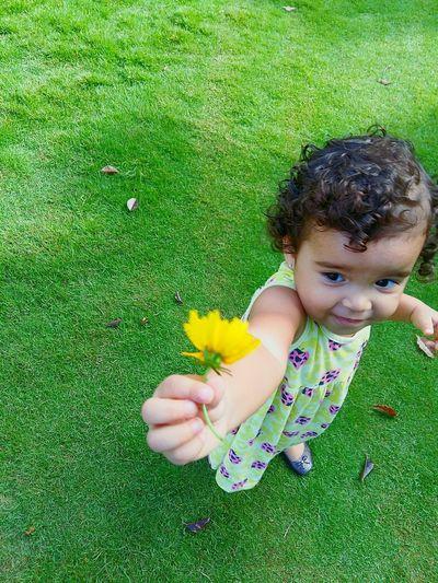 Minha flor. Flor Jardimsecreto Rebeca