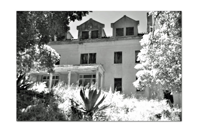 Officer's Row At Angel Island 4 Tiburon, Ca. Fort McDowell East Garrison Angel Island U.S.Army Officers Row Officers Quarters Built By Military Prison Labor From Alcatraz Monochrome_Photography Monochrome Trees Black & White Black & White Photography Black And White Black And White Collection  Architecture Architecture_collection Housing Landscape_Collection Landscape Military Base Built 1910 Military History Bnw_friday_eyeemchallenge