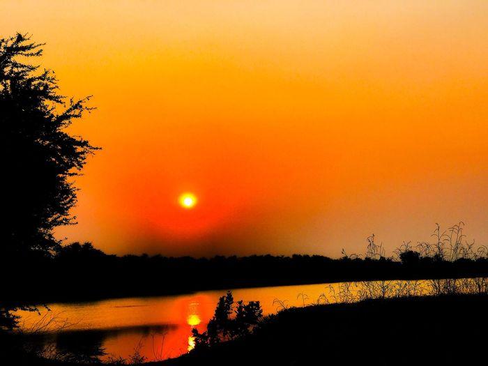 Sunset Orange 🍊 🌅🍊