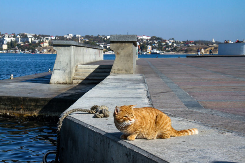 Crimea Sevastopol  Animal Themes Architecture Big Cat Black Sea Building Exterior Built Structure Cat Cat In The Port Cat♡ Day Domestic Animals Domestic Cat Feline Mammal No People One Animal Outdoors Red Cat Water Waterfront