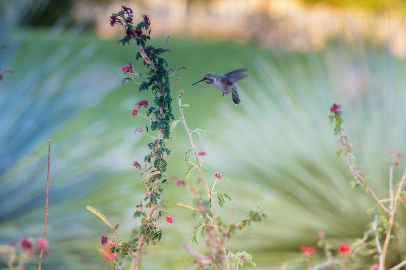 Bird flying in a flowering plants