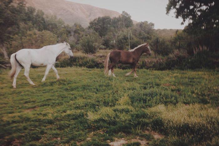 Horses at Ávila, Spain Horse Horses Nature