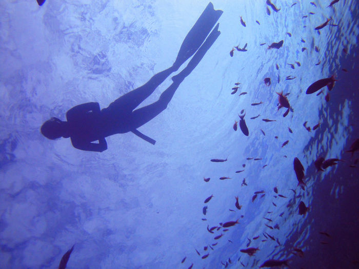 Diving Freediving Ras Mohamed Egypt Snorkeling Sun And Sea Swimming Underwater