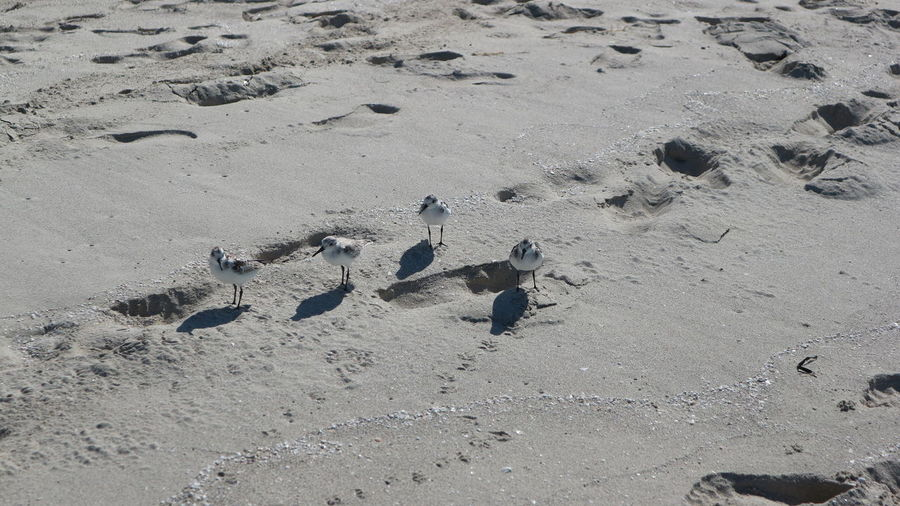 High angle view of birds on beach
