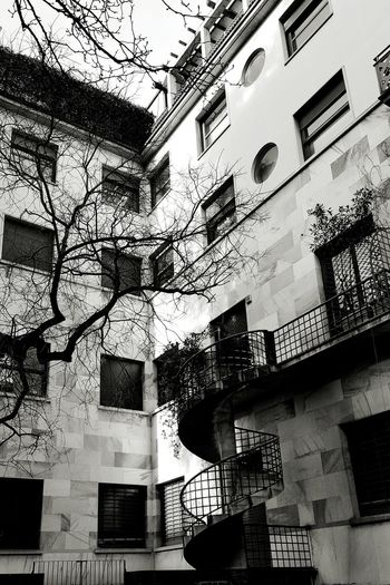 Window Building Exterior Built Structure Architecture No People Day City Outdoors Blackandwhite Black And White Black & White Tree Winter Stairs