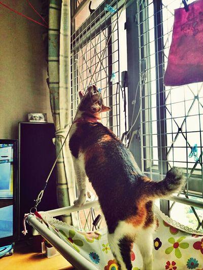 I'm a lion!!! Cat Lovers Cute Pets Cat♡ Calicocat
