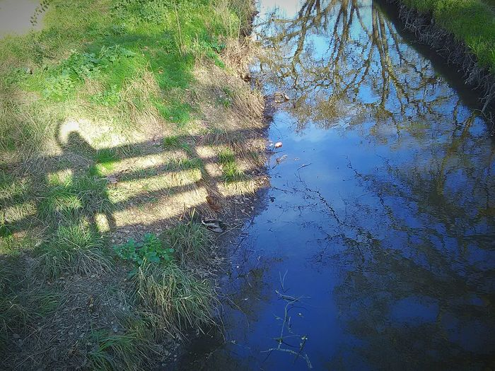 Stream Trees Water Reflections Reflections On The Water Reflections Of Beauty Water Nature Photography Taking Photos My Photography This Week On Eyeem My Point Of View Shadows And Silhouettes Tree Porn Thats Me ♥ Sunlight, Shades And Shadows My Shadow Looks Good My Shadow ❤ Hi