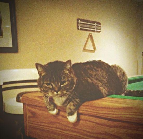 Cat Pooltable