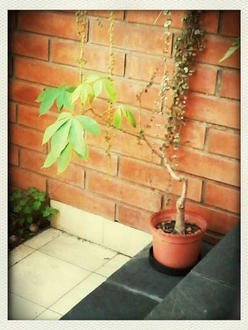 Nature Plantas