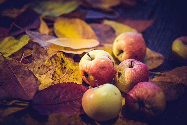Harvest or Thanksgiving background with apples and leaves on wooden table. Vintage effect Apple Autumn Autumn Leaves Bio Natural Thanksgiving Apple - Fruit Autumn Background Change Fall Fall Leaves Food Food And Drink Freshness Fruit Fruits Harvest Healthy Eating Leaf Leaves Nature No People Plant Part Wellbeing