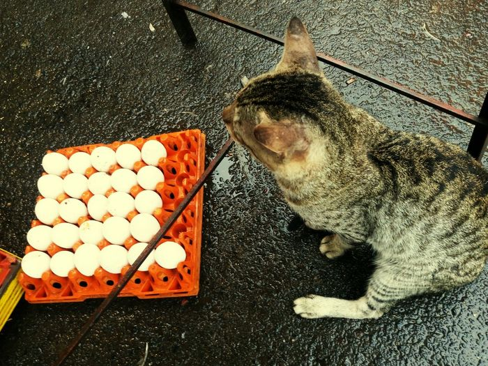 High Angle View Of Cat Sitting By Egg Carton On Road