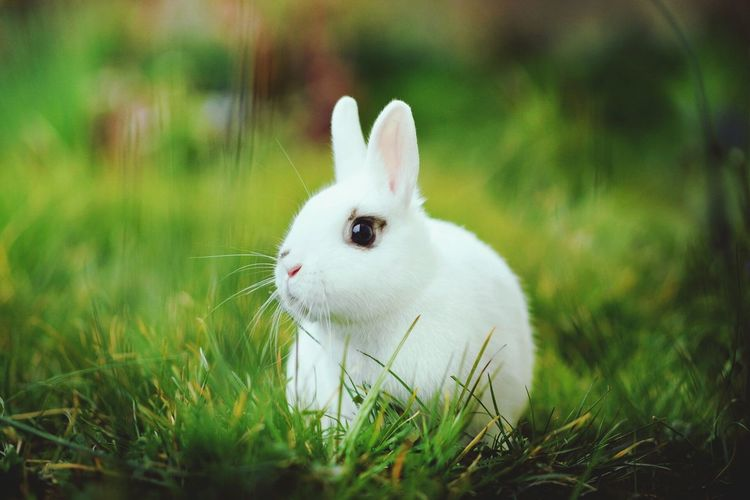 Peace. Grass Animal Themes Easter Animal Pets