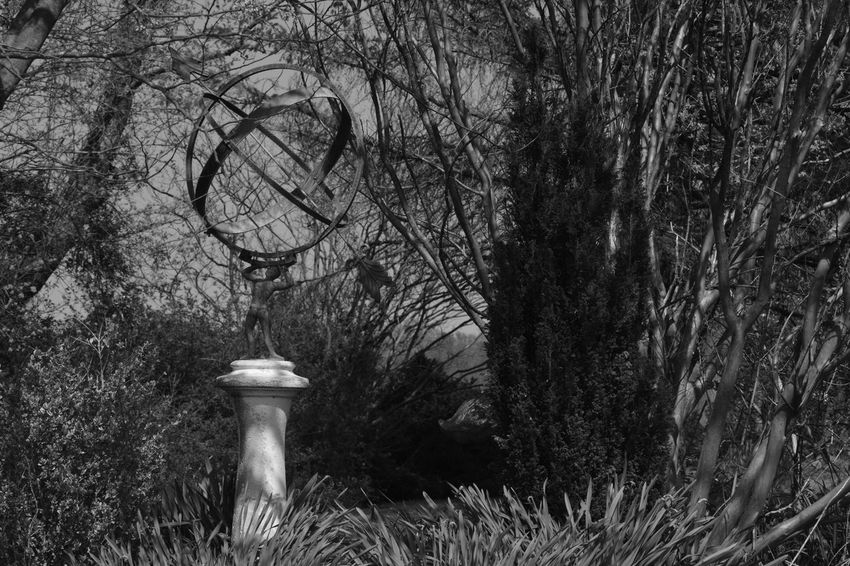 Bare Tree Beauty In Nature Blackandwhite Branch Day Eye4photography  Grass Grey Growth Light Monochrome Nature No People Outdoors Resist Shadow Sky Statue Tranquility Tree
