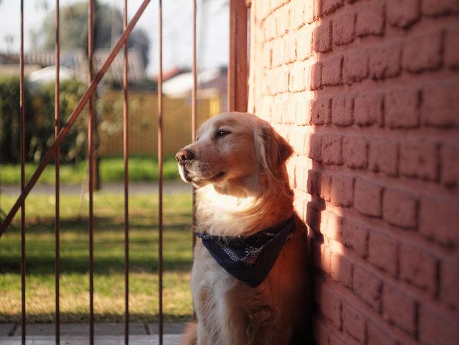 Pet Portraits m42, helios 44-6 Chile♥ Perrito Doggy Portrait Outdoors Pet Helios 44-6, 58/2,0 Helios 44-6