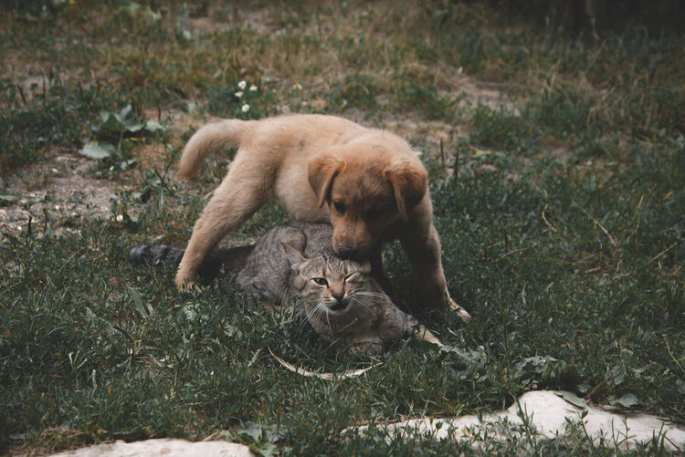 Gog & Cat Mammal Animal Themes Animal Feline Cat Lion - Feline Animal Wildlife One Animal Vertebrate Land Domestic Animals Animals In The Wild Pets No People Grass Day Plant Nature Relaxation Lioness Undomesticated Cat Animal Family