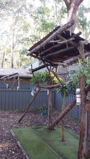 in port macquarie war ein koala krankenhaus, dass wir uns natürlich nicht entgehen lassen konnten Cute Koala Koala Sanctuary Port Macquarie