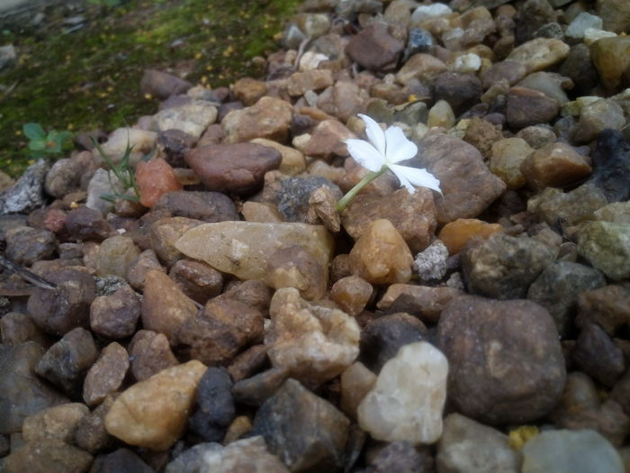 White Flower And Stones Friendship.