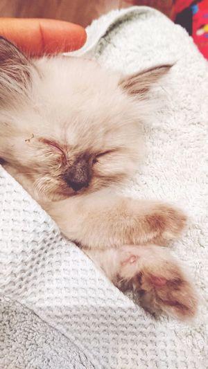 Sleeping Sleep