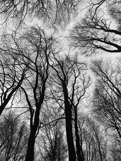 Trees Bare Tree Beauty In Nature Silhouette Tree Outdoors Sky Treetop
