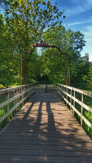 Canal Bridge Wood Bridge Nature Footbridge Beauty In Nature Tree Forest Canada Water Walkway Bluesky