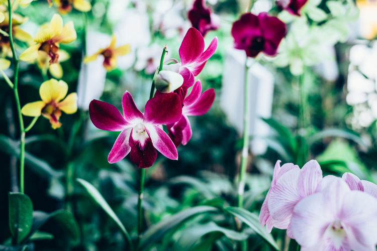 ground orchid Backgrounds Beauty In Nature Blooming Close-up Colorful Contrast Copy Space Day Exotic Flower Flower Head Fragility Freshness Gardening Growth Nature Orchid Outdoors Petal Pink Color Plant Selective Focus The Week On EyeEm Springtime Decadence