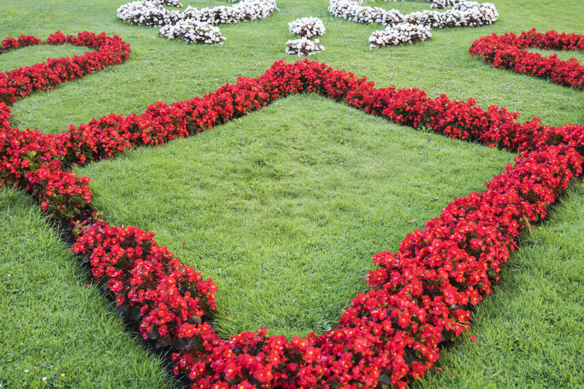 Begonia Flower Gardening Beauty In Nature Begonia Blossom Day Flower Flower Head Flowerbed Flowerbeds Freshness Garden Garden Photography Grass Green Color Landscaped Nature No People Outdoors Park Plant Red Red Color White