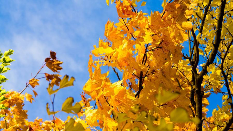 Fall Color. Nature Photography Sky And Clouds Changing Leaves Fall Colors Vibrant Saturation Sony A6000 Project365
