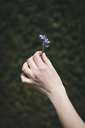 Adult Beauty In Nature Body Part Close-up Day Flower Flower Head Fragility Human Body Part Human Hand Nature One Person One Woman Only Outdoors Young Adult
